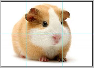 Как поделить <b>фото</b> на несколько <strong>частей</strong>