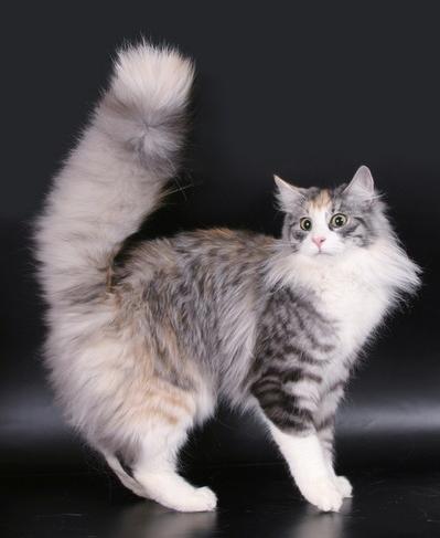 Domestic cats need regular brushing.