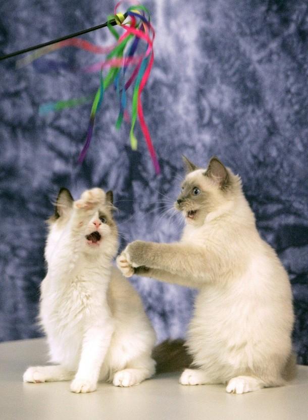 Как сделать игрушки для котенка