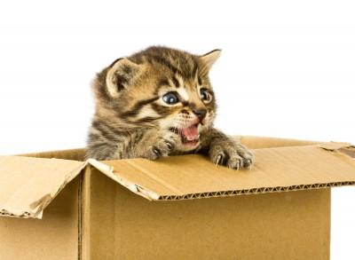 Домик для кота можно соорудить из обычной картонной коробки