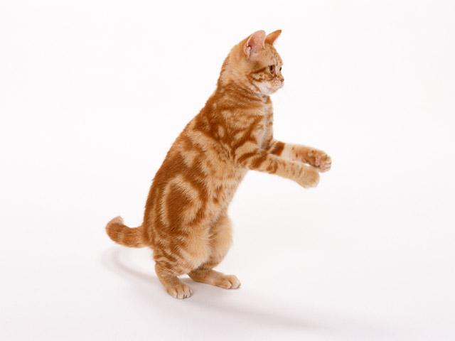 как котенка приучить к рукам