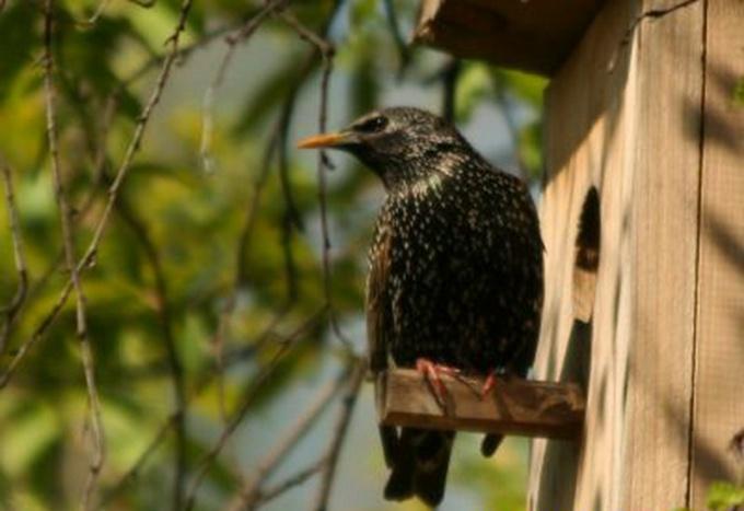 Как сделать домик для птиц