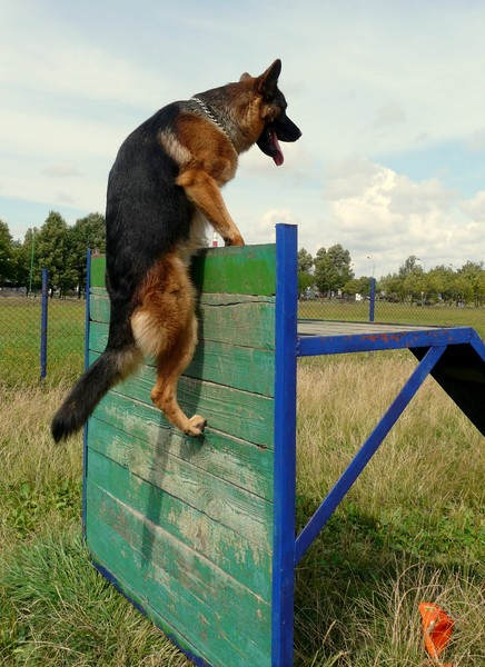 How to teach <strong>puppy</strong> <b>commands</b>
