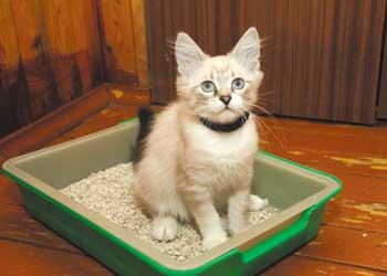 Как приручить <b>кота</b> ходить в <strong>туалет</strong>