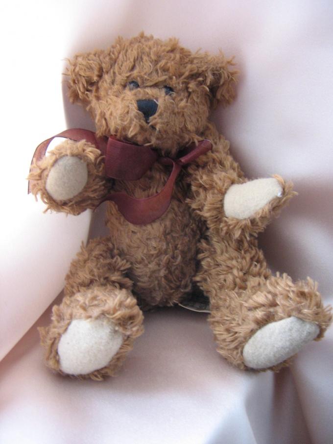 How to call a Teddy bear