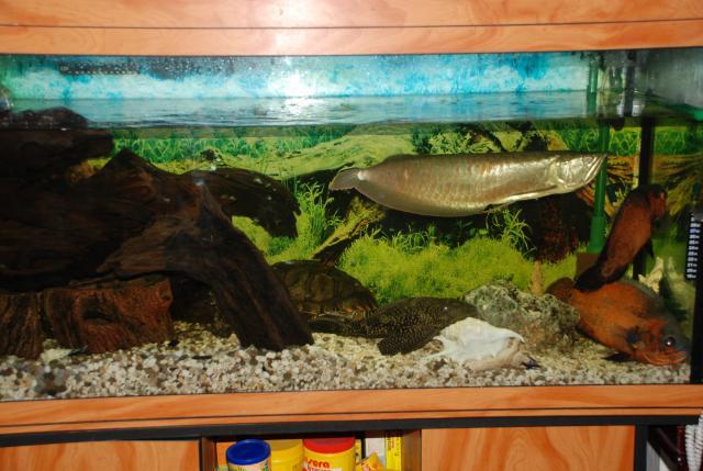 как клеится фон к аквариуму