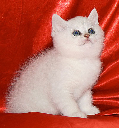 How to name <strong>white</strong> <b>cat</b>