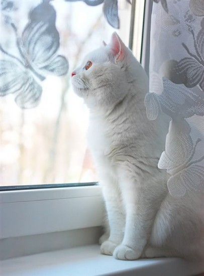 How to name a white cat