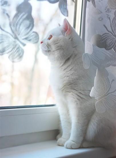 белая кошка имена