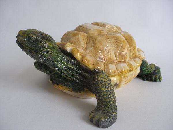 черепахи сухопутные . самцы выглядят