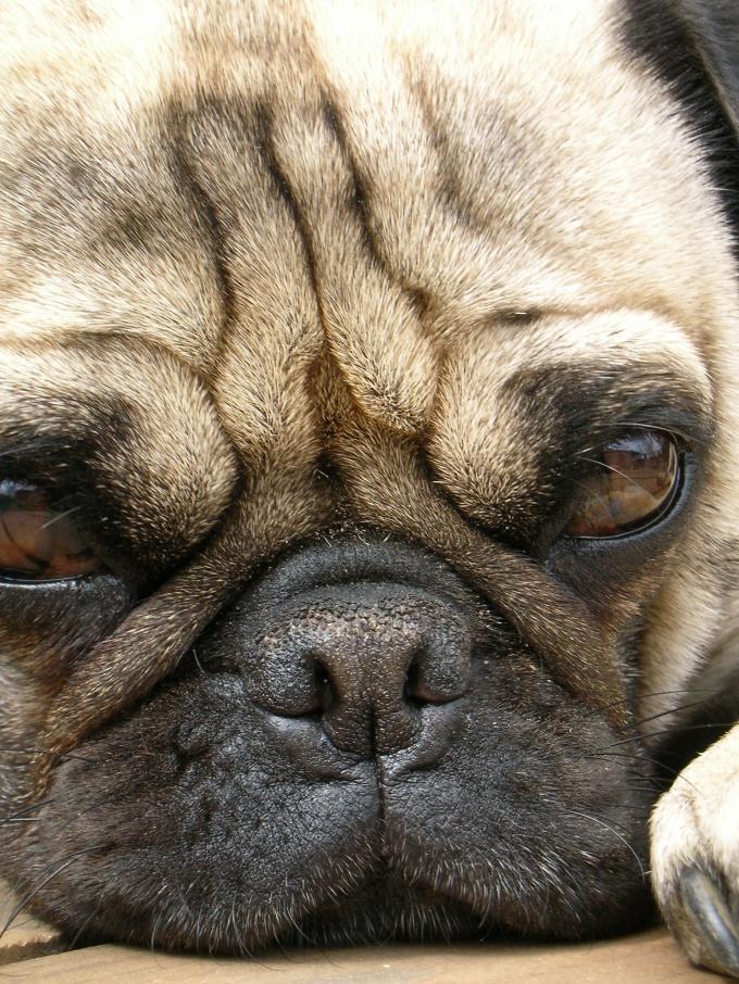 как найти хозяина собаки