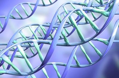 Как решить генетическую задачу