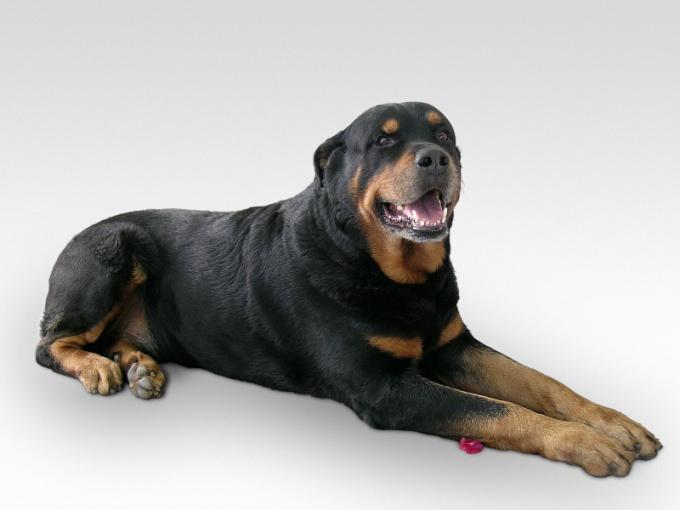 как обрезать ногти собаке