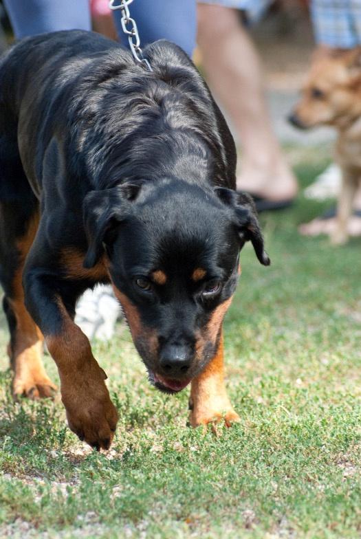 боязнь резких звуков у собак