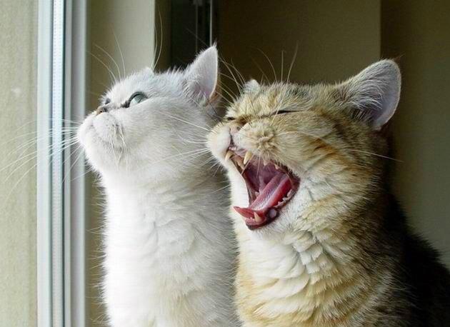 Даже кошку можно научить разговаривать