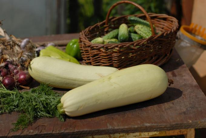 Рецепт зимнего рататуя