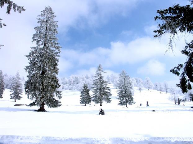 Как нарисовать зимнее дерево