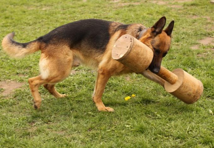 Как выдрессировать <strong>собаку</strong>