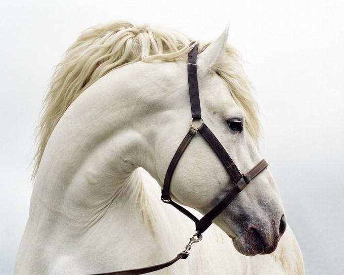 Как одеть лошадь