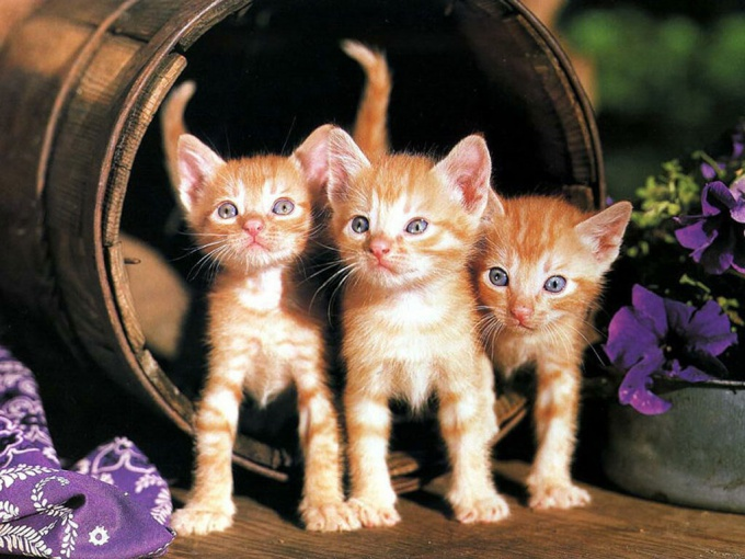 вырастить котенка
