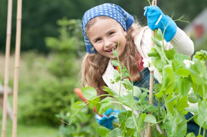 Как научить ребенка работать