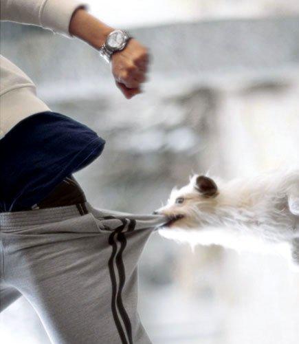Отучить <strong>собаку</strong> кусаться сложно, но возможно