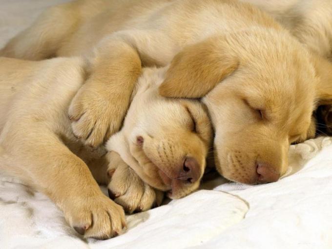 Учите собаку спать на своем месте с самого раннего возраста