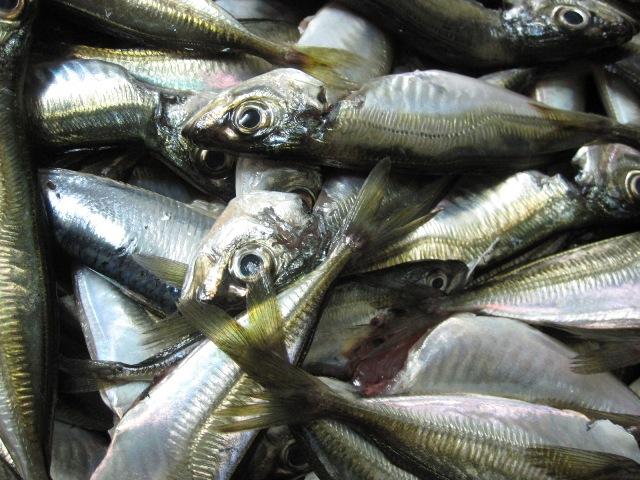 Как сохранить рыбу свежей