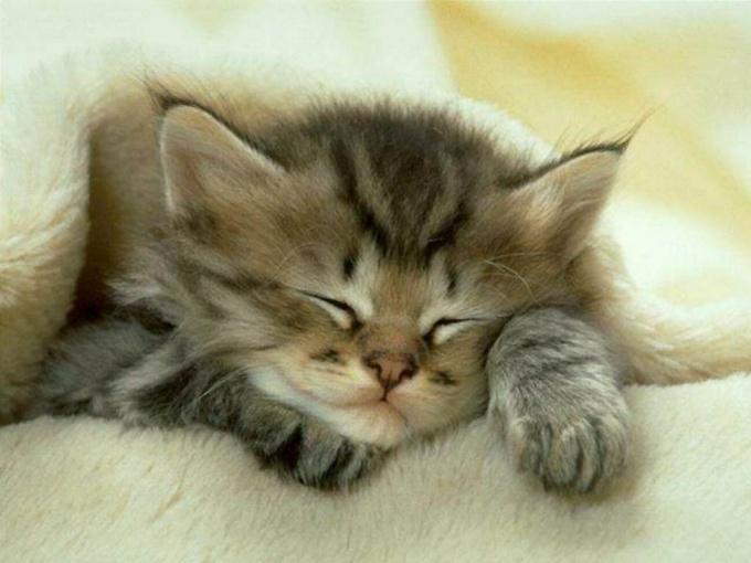 как выходить слабого котенка