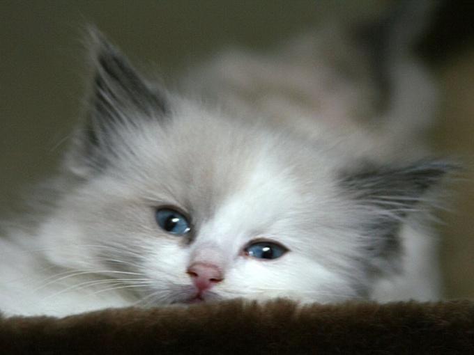 как прикармливать котят если у кошки не хватает молока