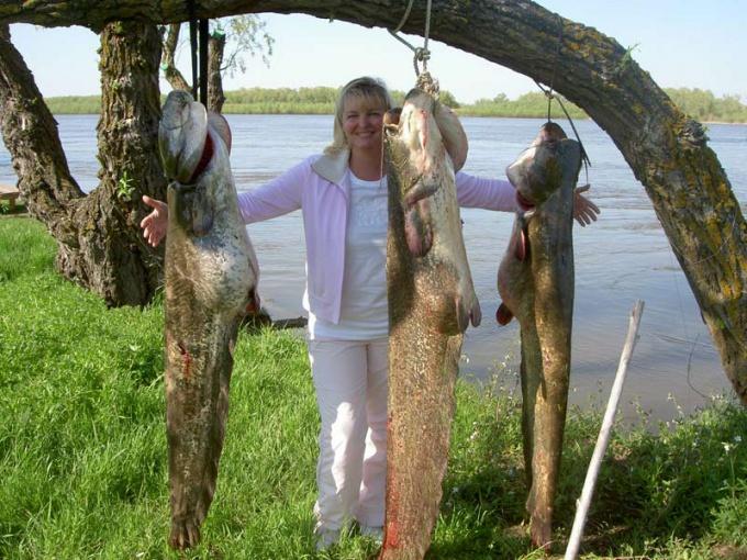Как поймать крупную рыбу