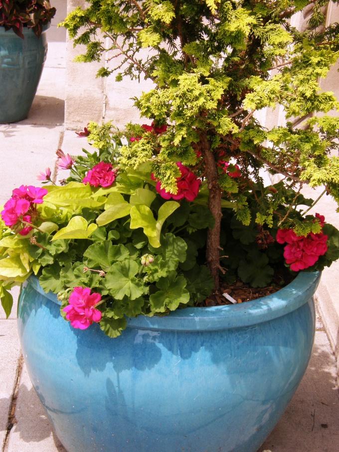 У любого растения есть два названия - научное и народное