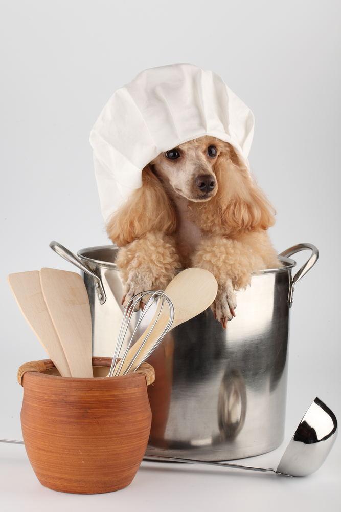 Как лечить подкожный клещ у собак