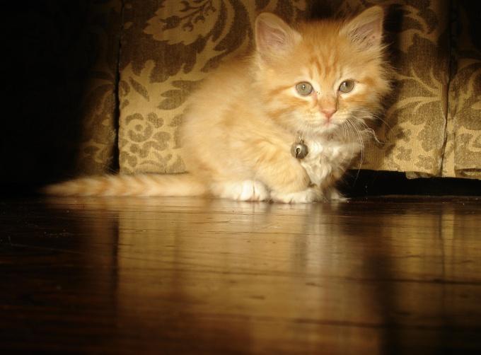 Как вырастить кота