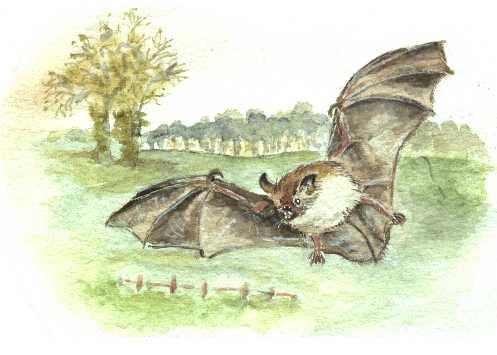 Как нарисовать летучую <strong>мышь</strong>
