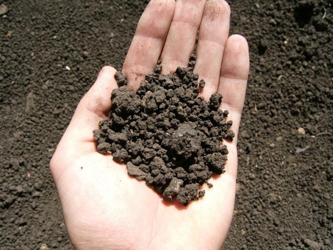 Как удобрить почву