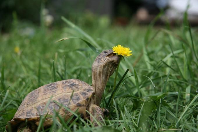 Предложите черепахе выбрать самой, что она будет есть