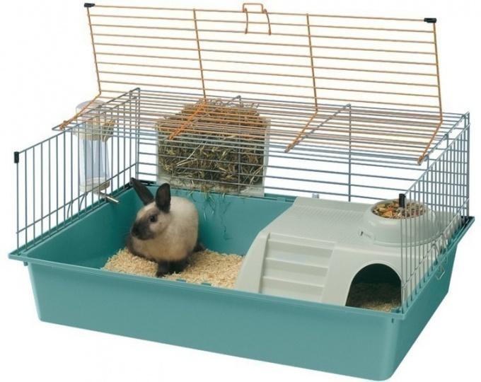 как обустроить клетку для декоративного кролика