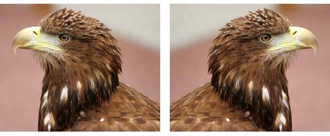 Фото до и после зеркального поворота