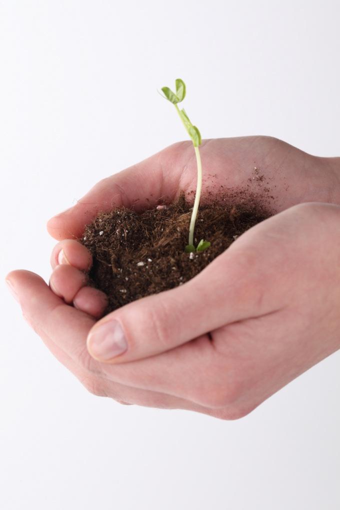 How to get a garden plot
