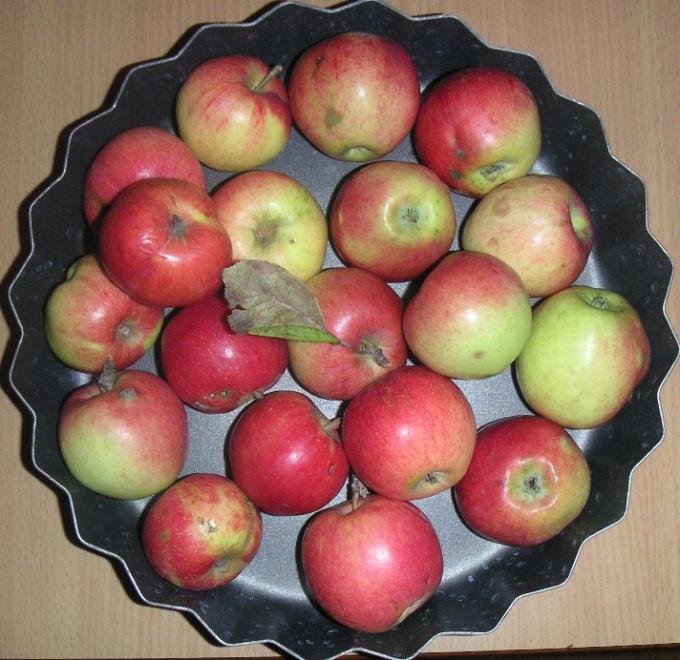 Как вырастить из семечка яблоню