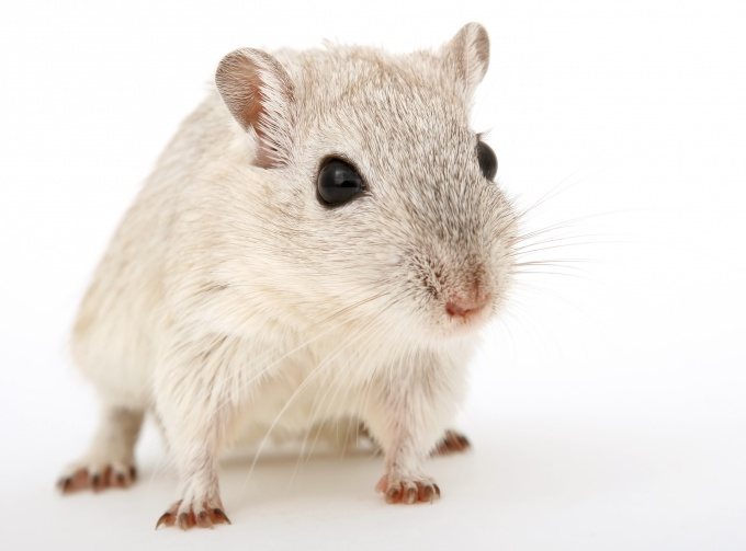 как сделать дом для мышки песчанки