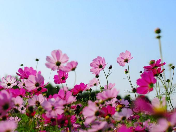 Как выращивать правильно цветы