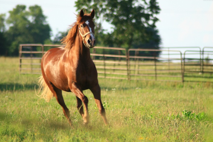 как объездить лошадь