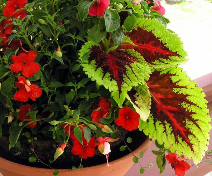 Как украсить дом цветами