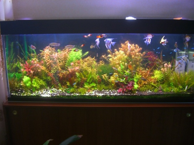 How to disinfect aquarium