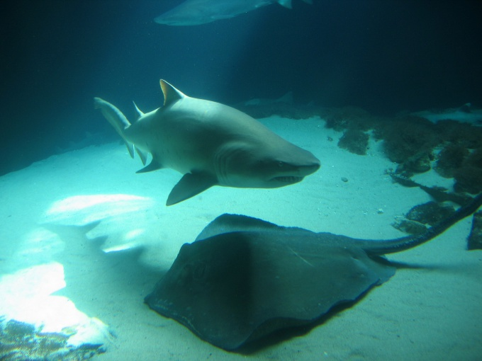 Как защититься от акул