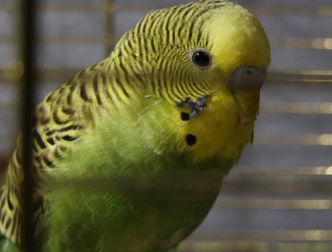 на пойманную птицу не загонишь в клетку пословица