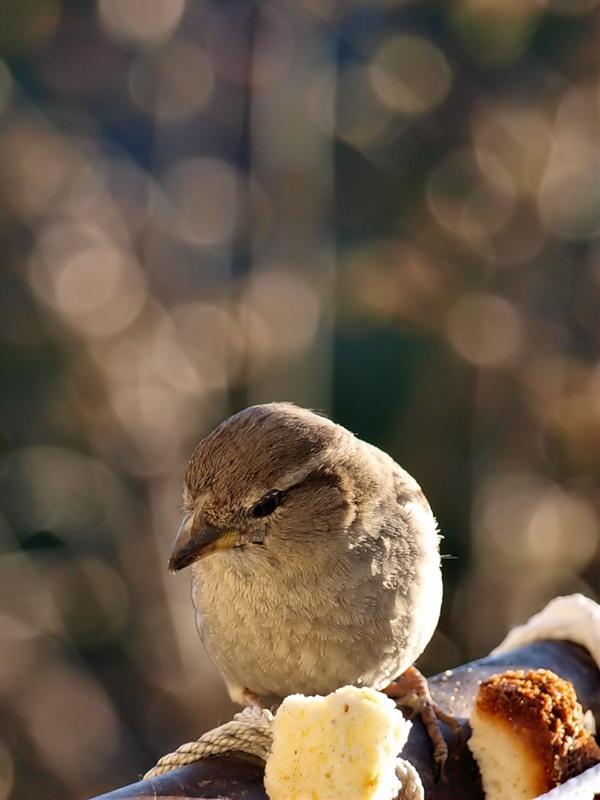 How to catch a Sparrow