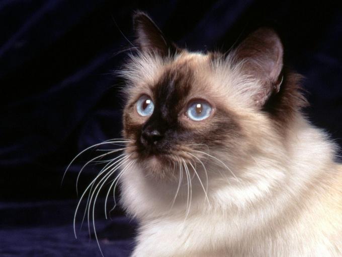 как считать возраст у кошек